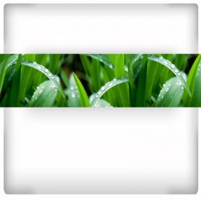 Fototapeta zielona trawa