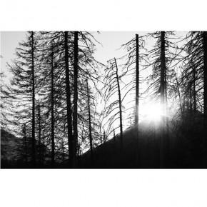 między drzewami