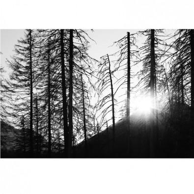 Fototapeta zachód słońca między drzewami