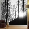 Aranżącj fototapety z zachodem słońca między drzewami
