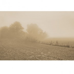 Fototapeta mgła na polu