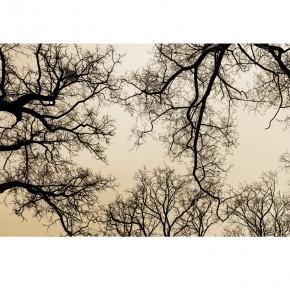 sklepienie gałęzi