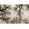 Fototapeta sklepienie gałęzi