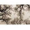 Fototapeta gałęzie w kolorze sepii