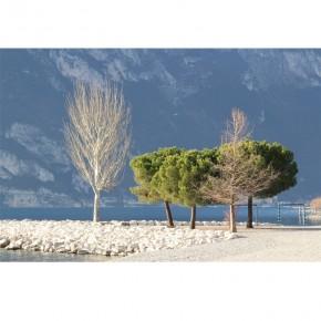 Fototapeta drzewa nad jeziorem Garda