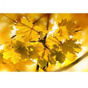 żółte jesienne liście