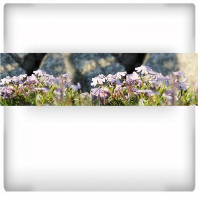 Fototapeta Małe kwiaty - panoramiczna