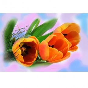 koralowe tulipany