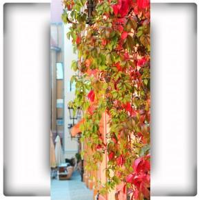 liście na wąską ścianę