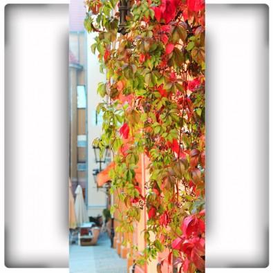 Fototapeta liście na wąską ścianę