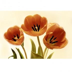 brąz tulipanków