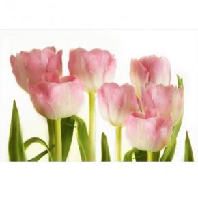 AS_Różowe tulipany