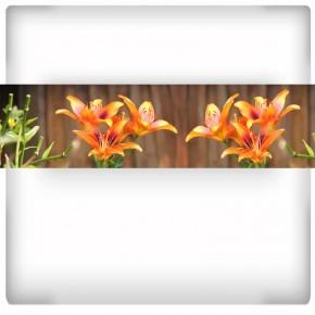 Fototapeta lilie na deskach