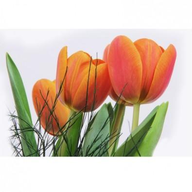 Fototapeta z kwiatami tulipanów