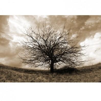 Samotne drzewo w sepii | Fototapeta drzewa