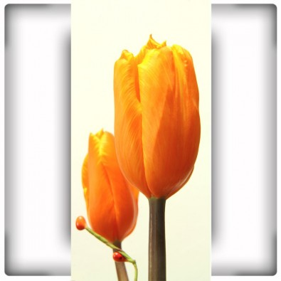 Fototapeta tulipan na wąską ścianę