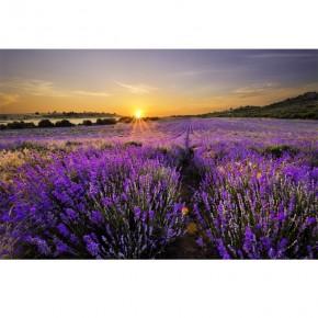 Fototapeta lawenda zachód słońca