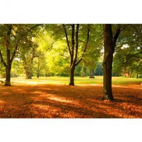 Fototapeta jesienne drzewo