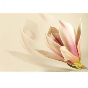 zmysłowe kwiaty magnolii