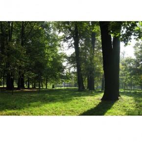 Fototapeta Tajemniczy park