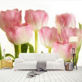 Fototapeta romantyczne tulipany